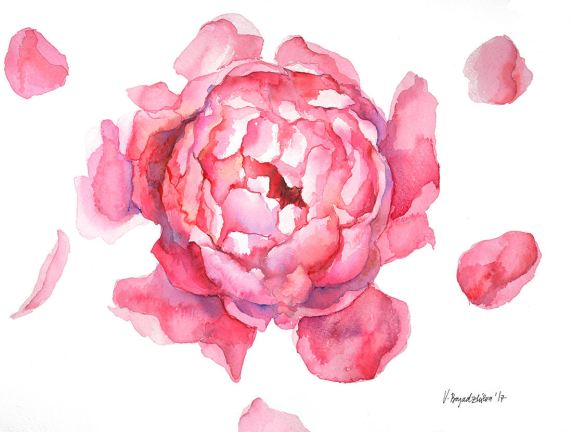 #WorldWatercolorGroup - Watercolor by Violeta Boyadzhieva - peony flower - #doodlewash