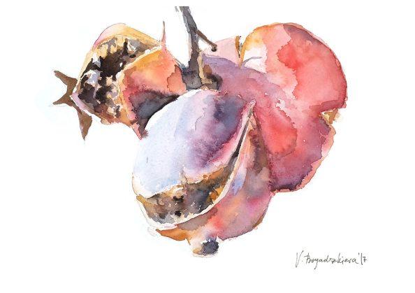 #WorldWatercolorGroup - Watercolor by Violeta Boyadzhieva - pomegranates - #doodlewash