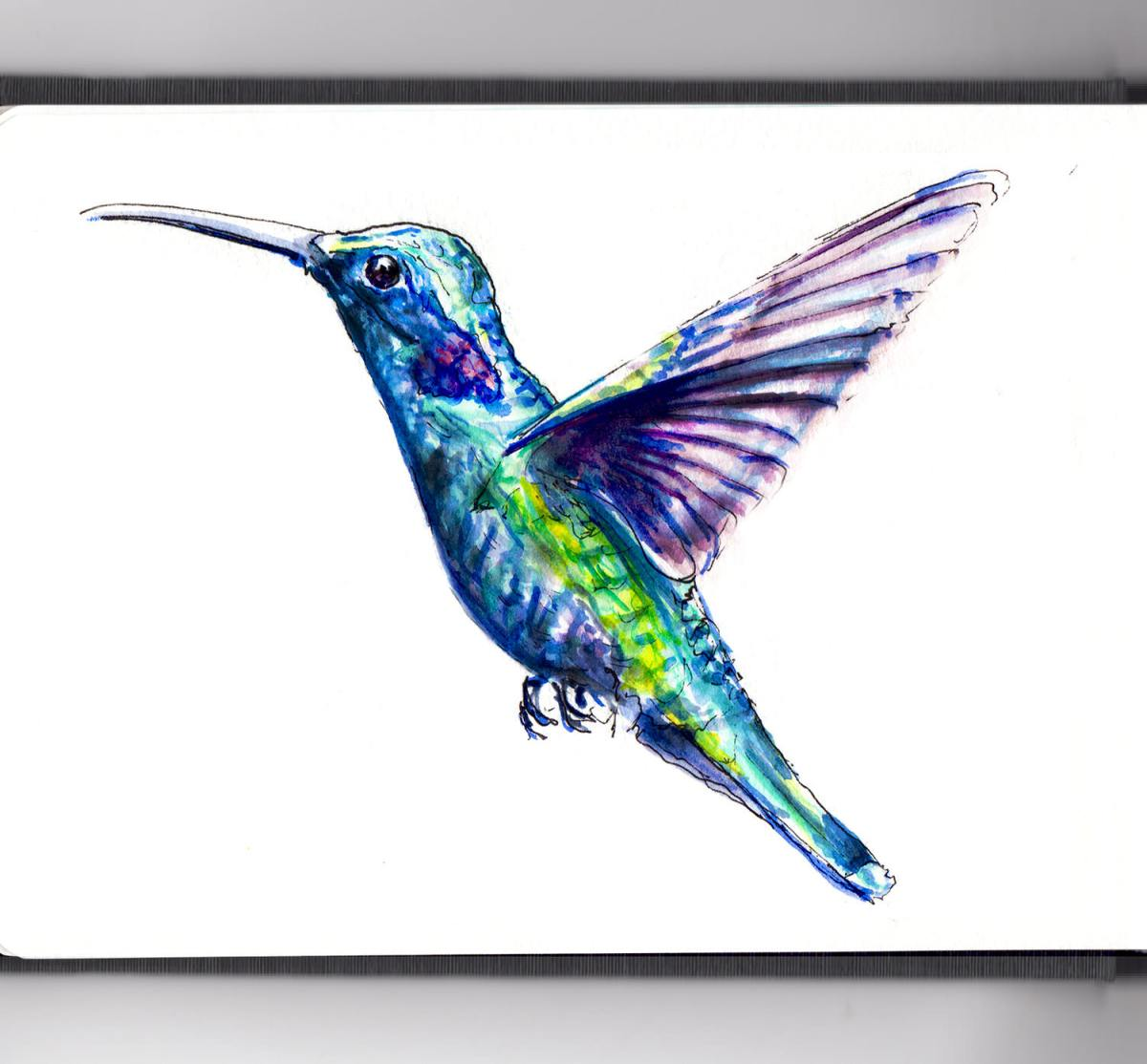 Day 21 - World Watercolor Month - A Hummingbird In The Wind - Doodlewash