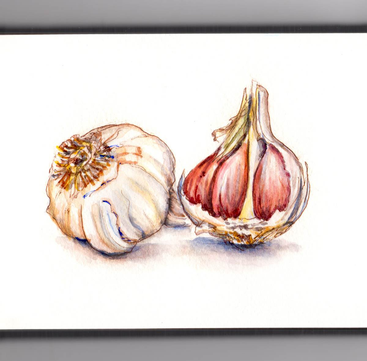 Day 24 - World Watercolor Month - Exploring Nature Garlic Cloves - Doodlewash