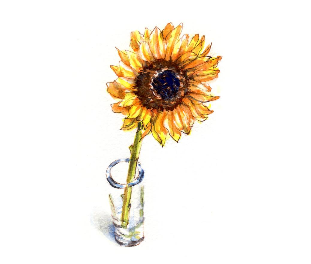 Day 27 - World Watercolor Month - A Lone Sunflower In A Glass Vase - Doodlewash