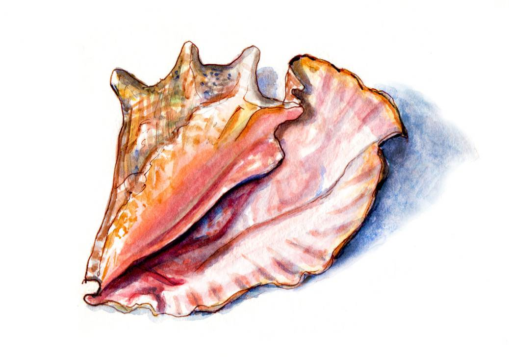 Day 3 - World Watercolor Month - Conch Shell On The Beach - Doodlewash