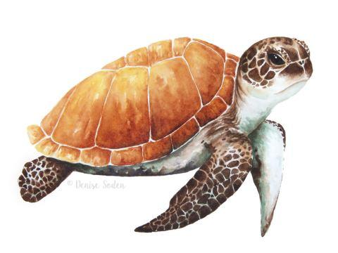 #WorldWatercolorGroup - Watercolor by Denise Soden - sea turtle - Doodlewash