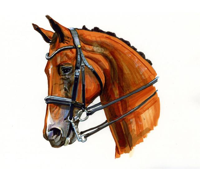 #WorldWatercolorGroup - chestnut horse head - Watercolour by Tim Olden - Doodlewash