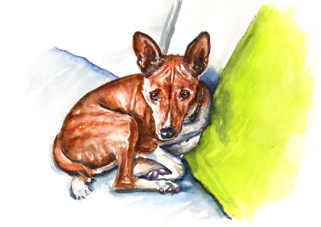 World Watercolor Group - Day 10 - My Favorite Pet - Brindle Basenji - Doodlewash