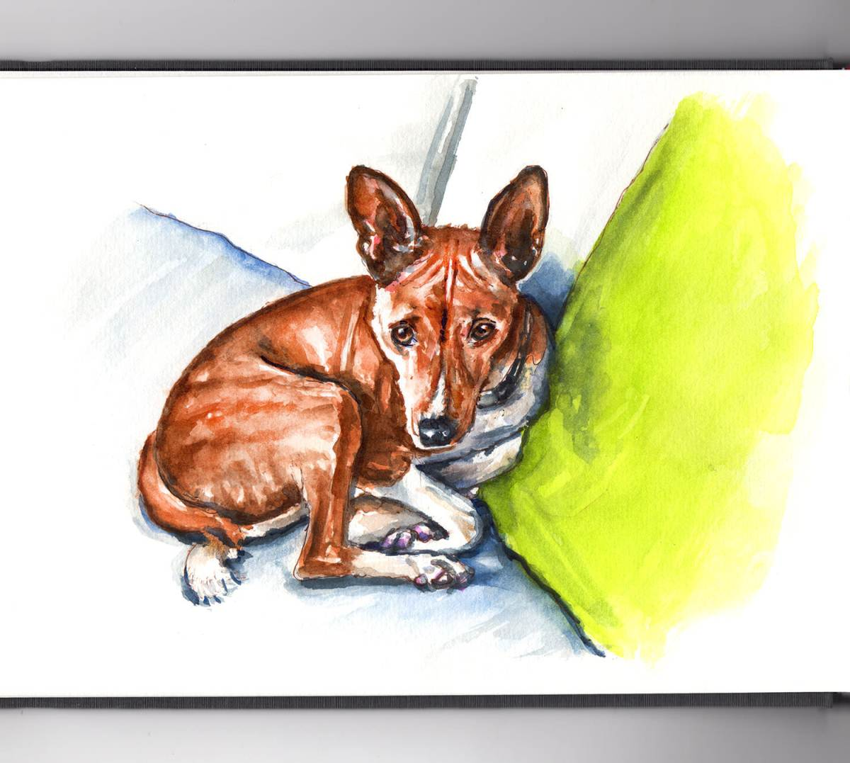 World Watercolor Group - Day 10 - My Favorite Pet - Brindle Basenji - Doodlewash