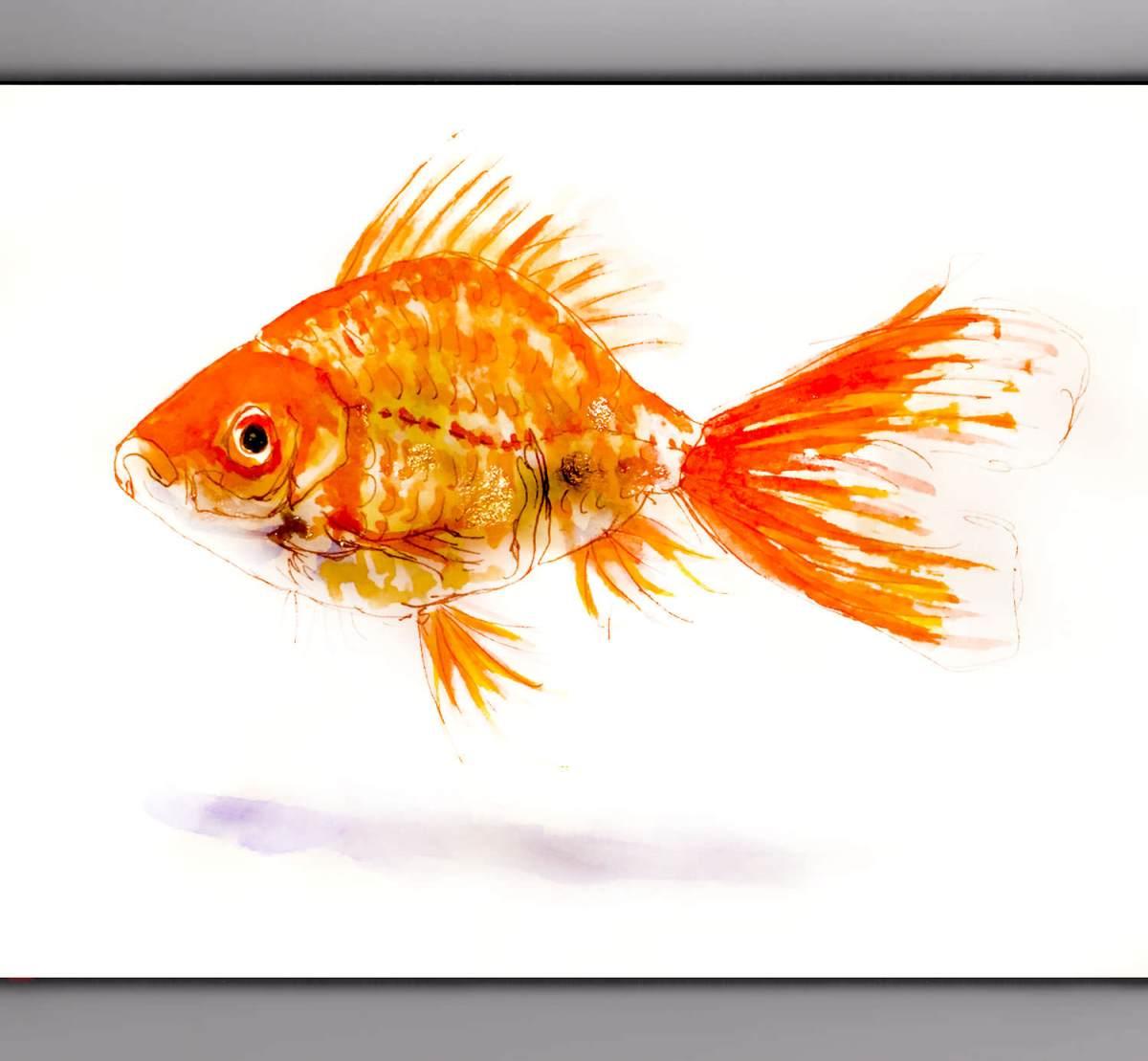 #WorldWatercolorGroup - Day 24 - My Favorite Fish - Goldfish