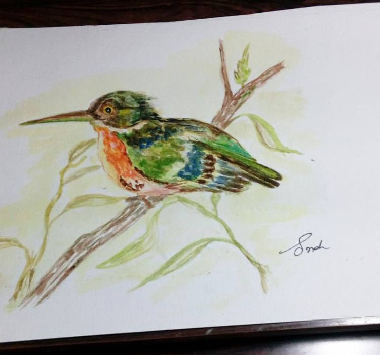 A Himalayan kingfisher. Posted.kingfisher