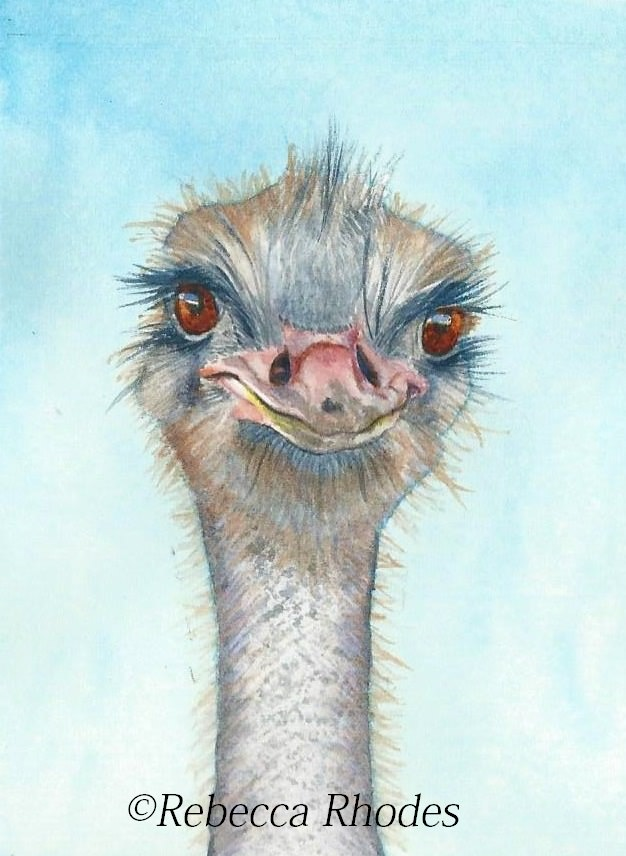 Ostrich mini watercolor painting on Arches Hot Press paper by Rebecca Rhodes watercolor-ostrich-rebe