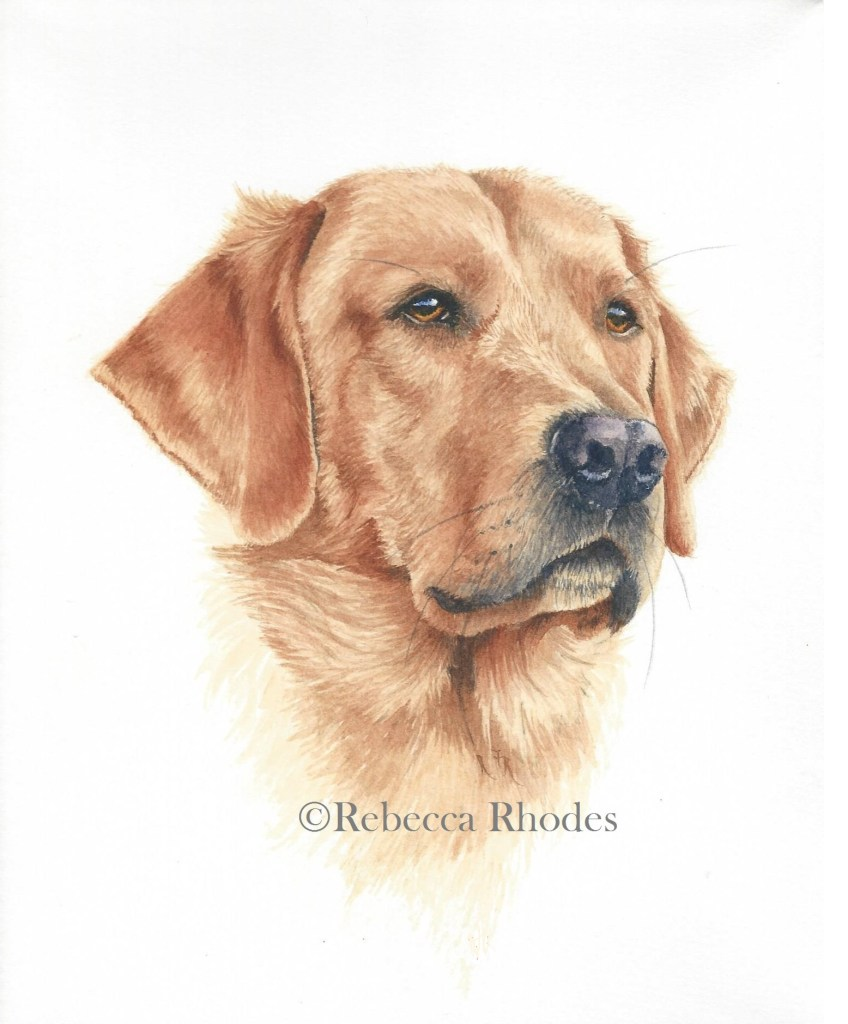 Retriever in Watercolor, 8×10 on Arches Cold Press paper Learn to paint this dog at https://reb