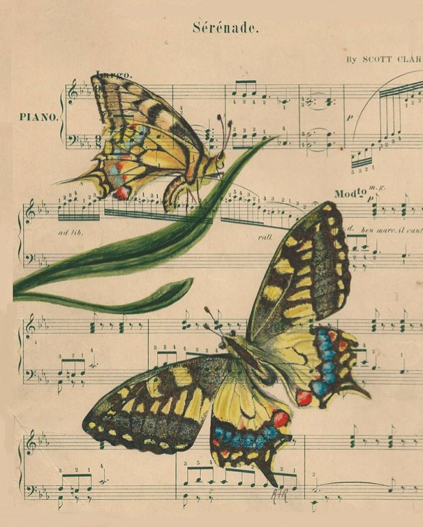 #WorldWatercolorGroup - Watercolor by Rebecca Rhodes - swallowtail butterfly Serenade sheet music - Doodlewash