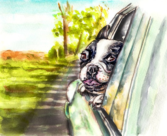 Day 10 - A Seat By The Window - Dog Riding In Car2