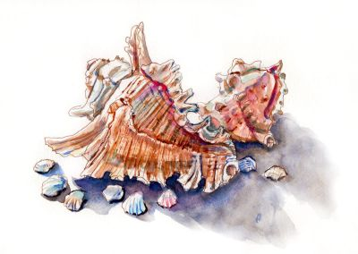 Day 27 - Collecting Sea Shells2