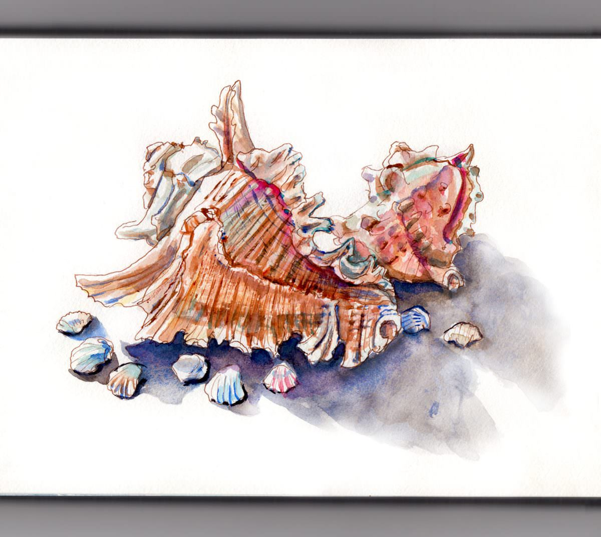 #WorldWatercolorGroup - Day 27 - Collecting Sea Shells - Doodlewash