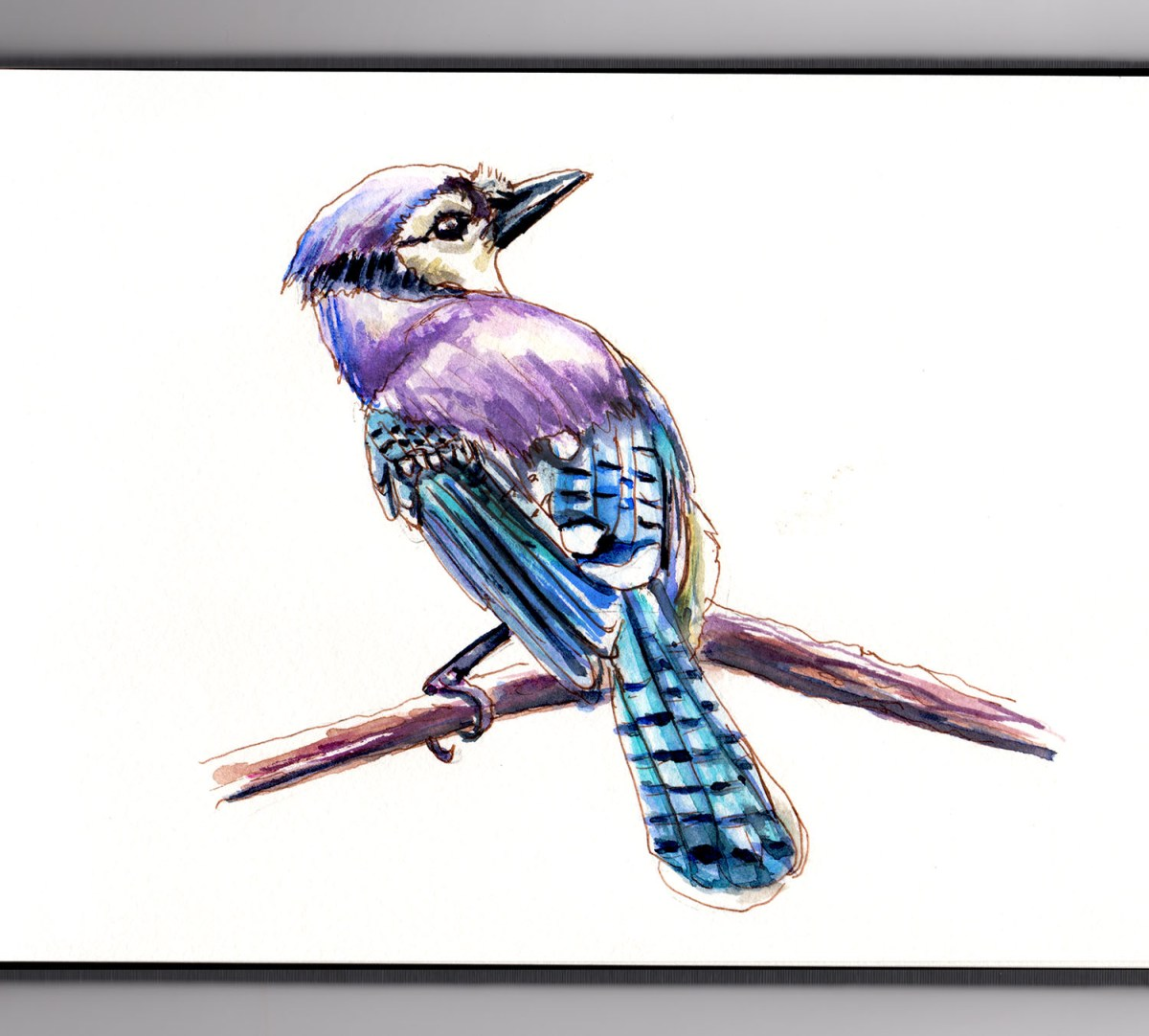 #WorldWatercolorGroup - Day 8 - Watching Birds - Bluejay - Doodlewash