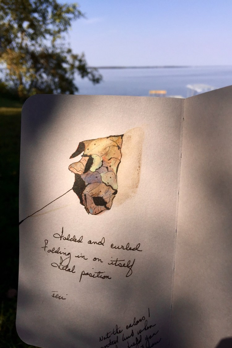 Sitting at the lake playing with my new Stillman&birns gray toned sketchbook. I picked up a leaf