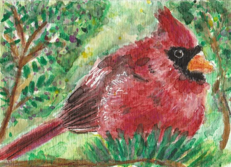 Red cardinal bird watercolor aceo painting IMG_20170921_0002
