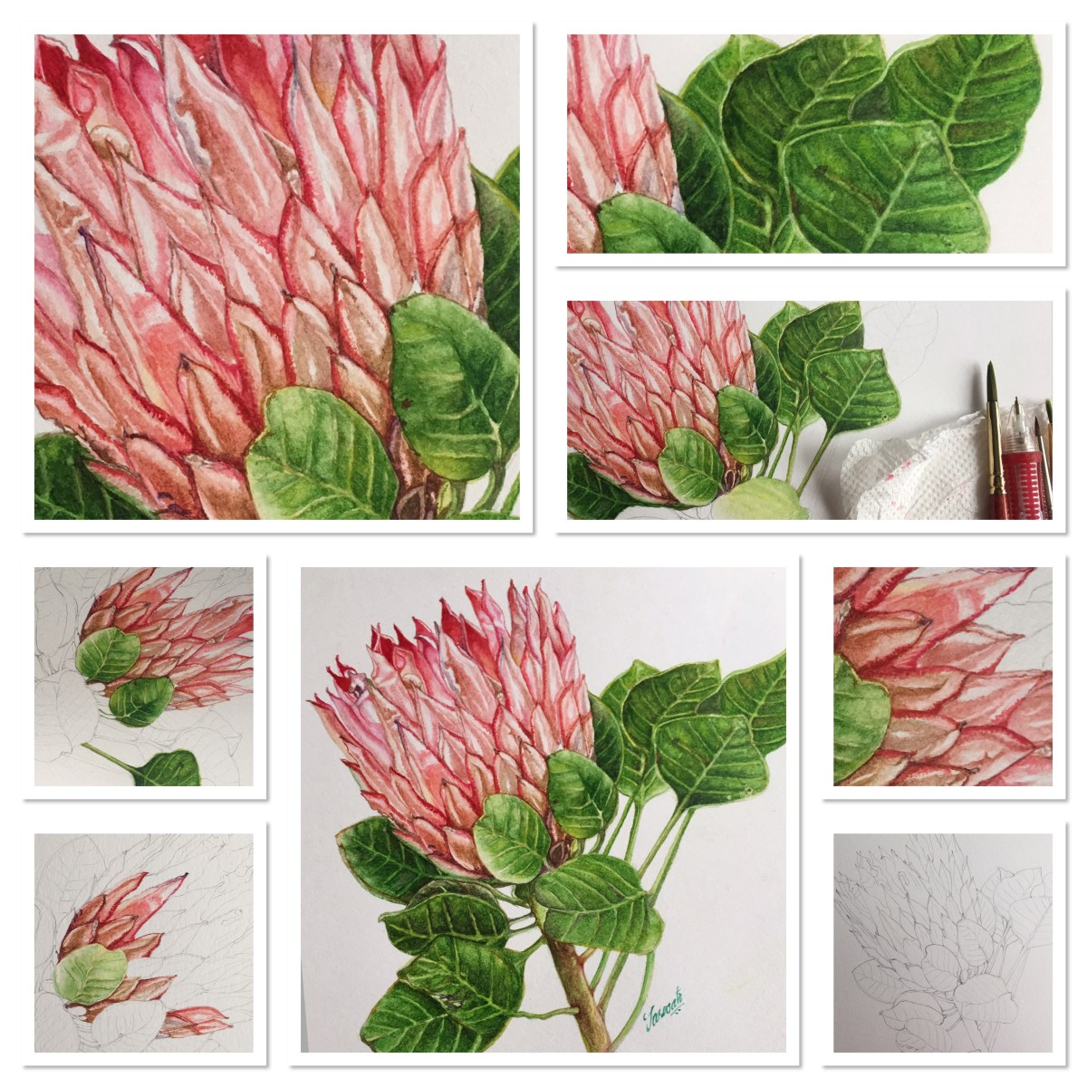 #WorldWatercolorGroup - Protea Watercolor Tutorial by Saswati Misra - Doodlewash