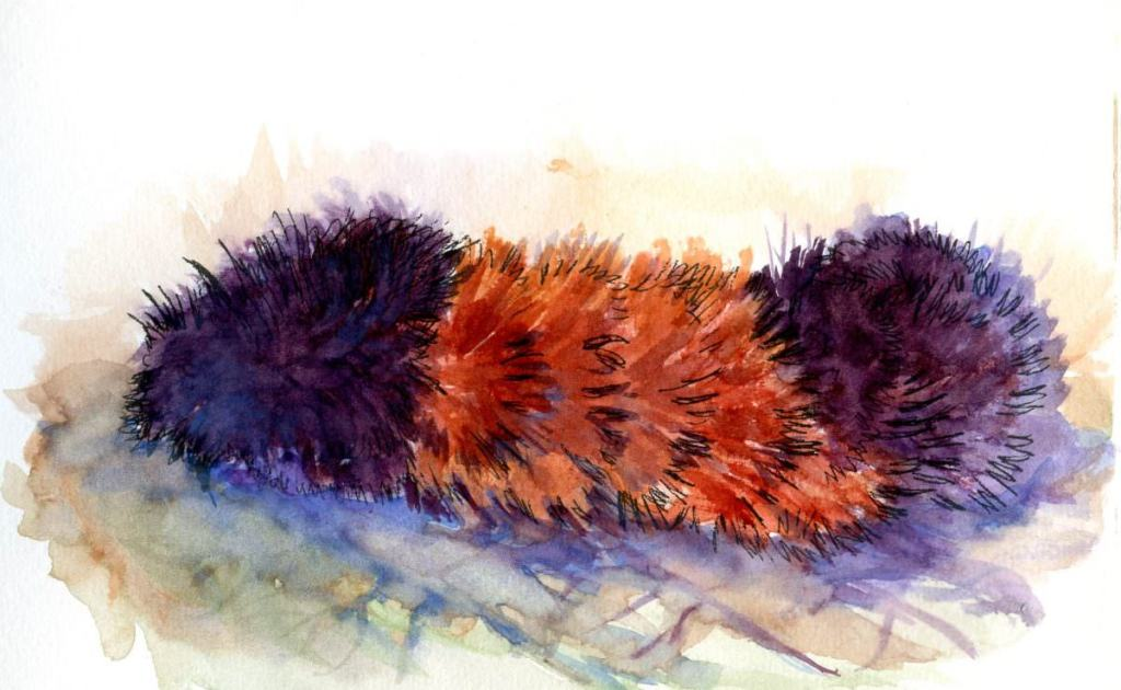 BugBear. You know it is autumn when you see the Banded Woolly Bear Caterpillars (also known as Bugbe