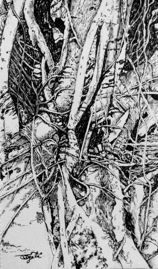 Banyan tree, your arteries and veins keep me clean. 19095439_136752073567332_8092977170208260008_o19