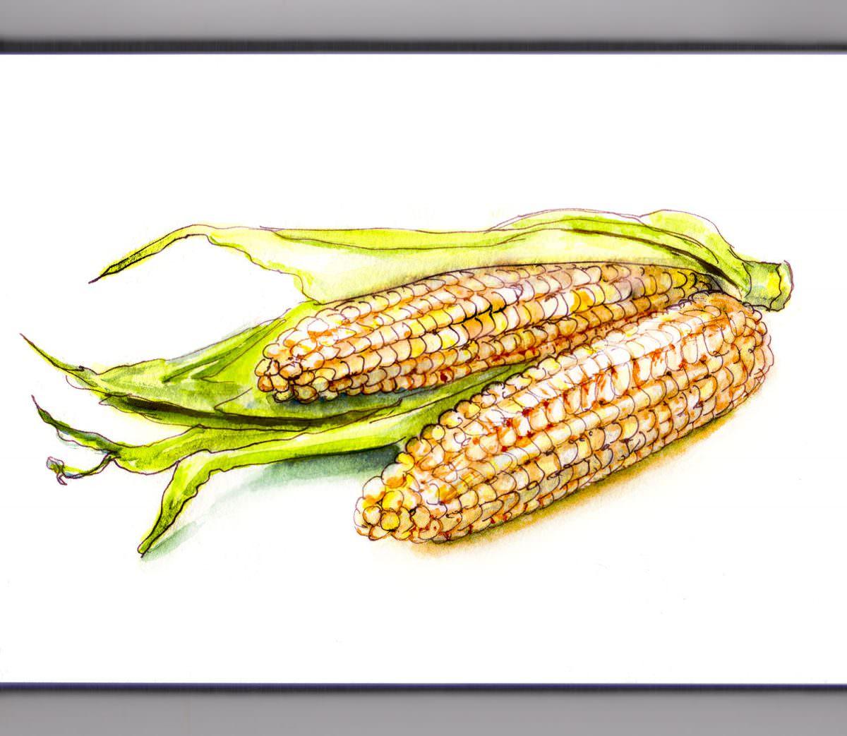 #WorldWatercolorGroup - A Bit Of Corn - #doodlewash