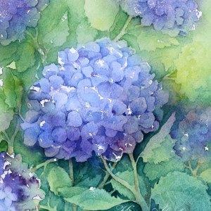 Hortensia – Original Watercolor
