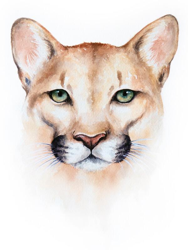 6b51db9b9c7ff Doodlewash® ~ Mountain Lion - Watercolor Print [8x10]