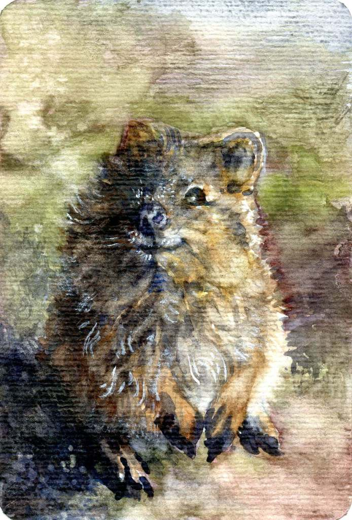 Quokka-the happiest animal in the world! Example done for my Review & Giveaway-Hahnemühle Water
