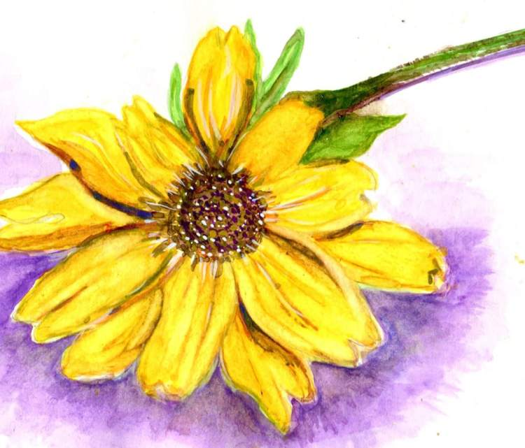 A few stragglers still blooming. Watercolor on mixed-media paper newscans1sunflower001