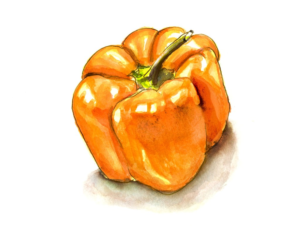 #WorldWatercolorGroup - Day 17 - A Little Pepper - Doodlewash