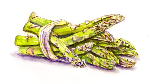 #WorldWatercolorGroup - A Bundle Of Asparagus - Doodlewash