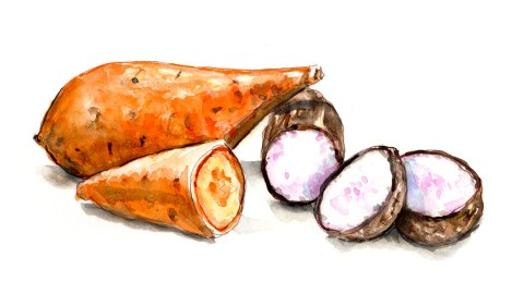 #WorldWatercolorGroup - Day 20 - Sweet Potatoes Vs Yams - Doodlewash