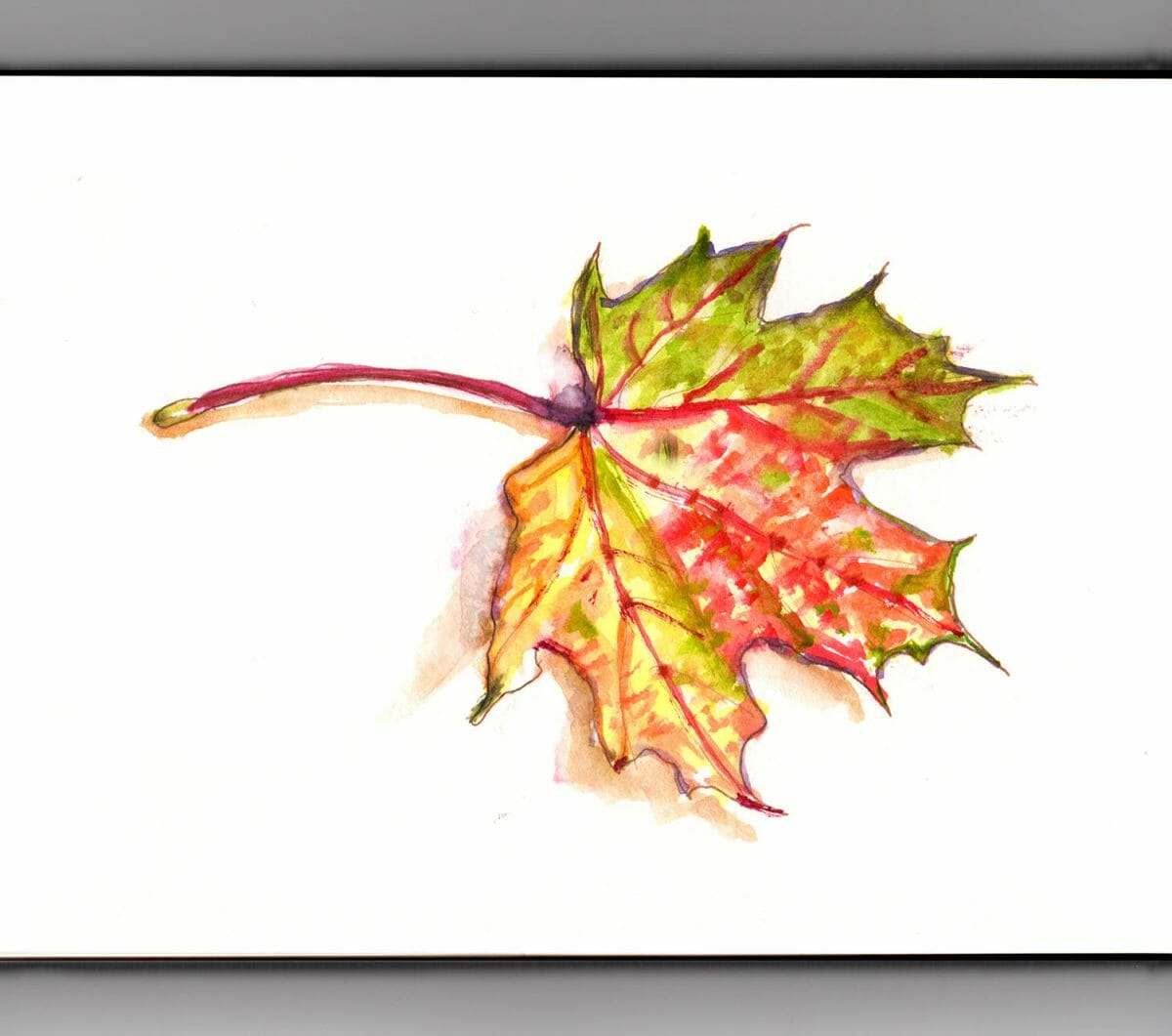 #WorldWatercolorGroup - Day 24 - Autumn Leaf Changing Weather - Doodlewash