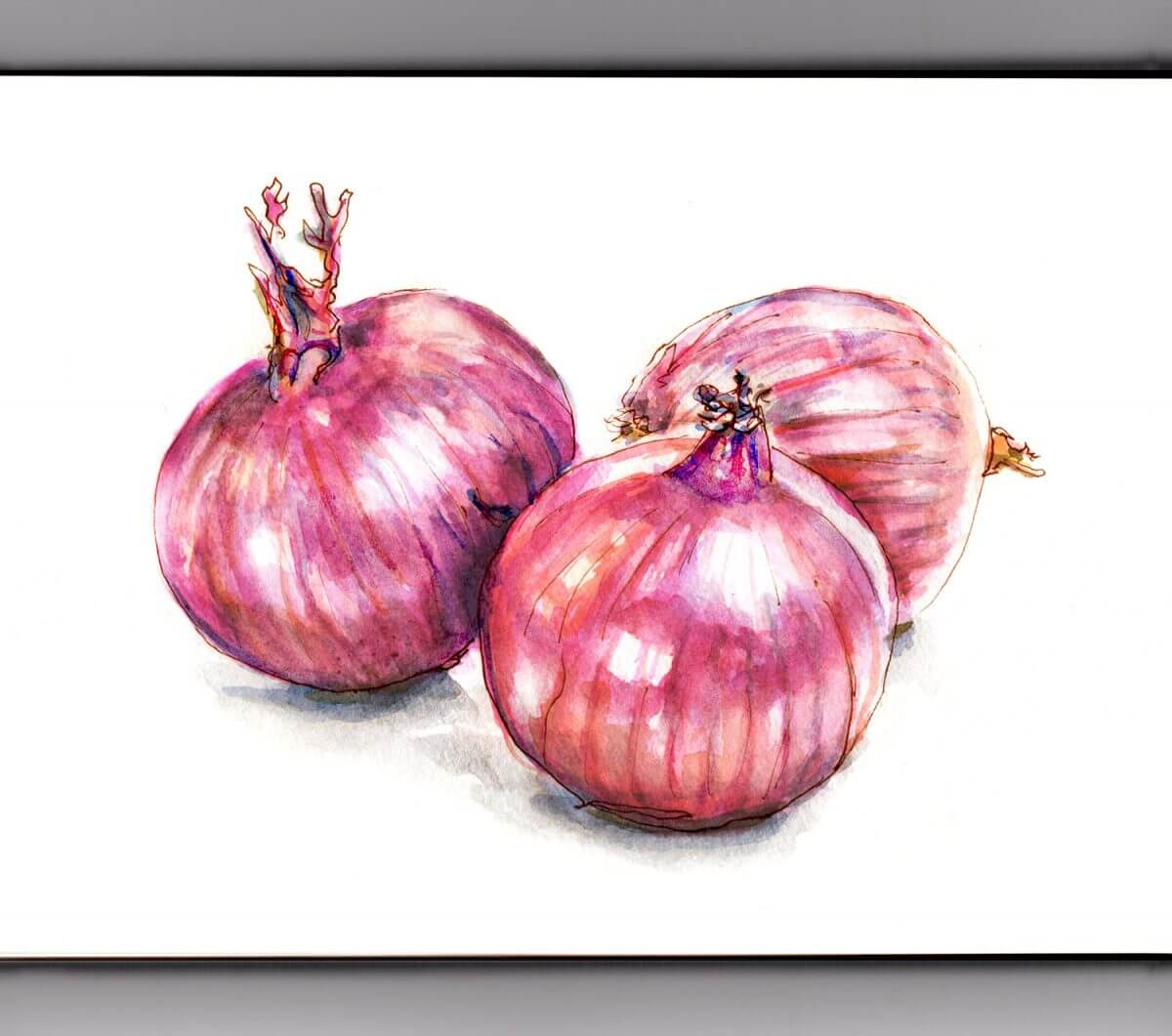 #WorldWatercolorGroup - Day 5 - Red Onions Aren't Red - Doodlewash