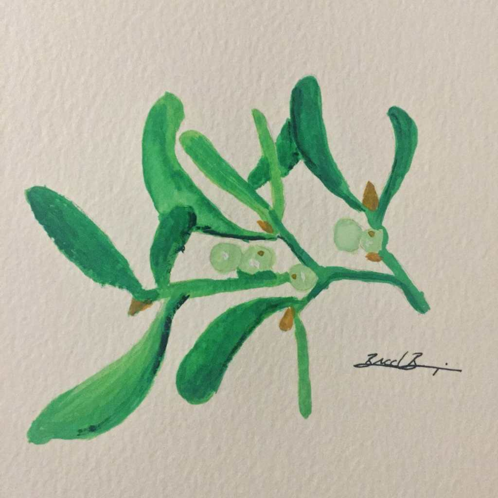 Day 15 – Mistletoe – It's so unassuming. Sneaky even… 0403CDA4-0274-4CB3-B6DF-42