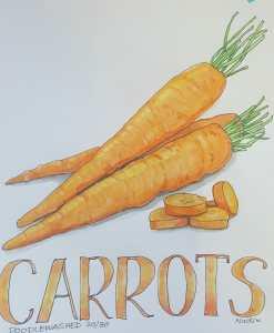 CARROTS ~ 30/30 and so ends @doodlewashed November food sketch challenges! I've loved the colo