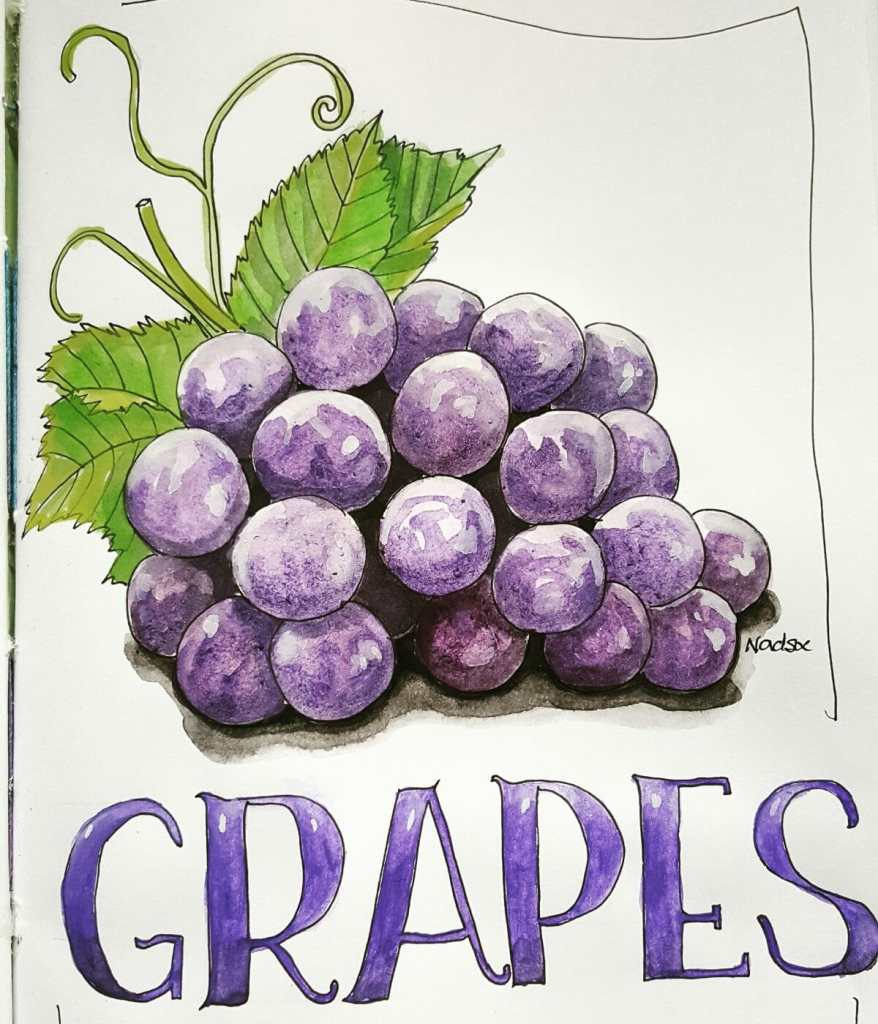 GRAPES ~ @doodlewashed 25/30 I love all the food sketches! It's becoming a really colourful co