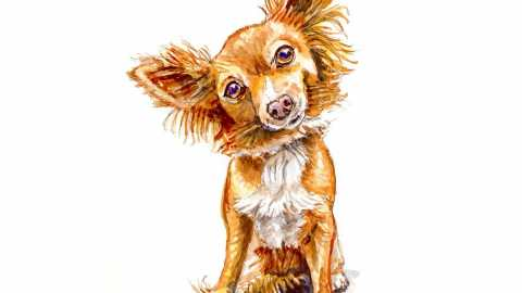 #WorldWatercolorGroup - Day 3 - Dog Good Hair Day - Doodlewash