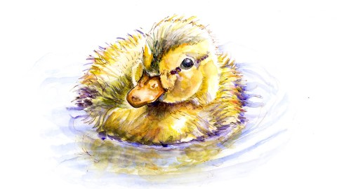 #WorldWatercolorGroup - Baby Duck Dreams - Doodlewash