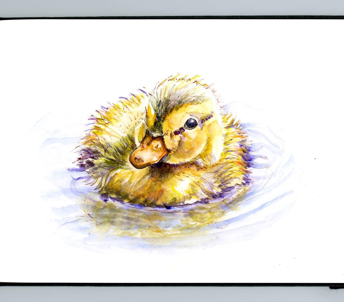 #WorldWatercolorGroup - Baby Duck Dreams - Doodlewash