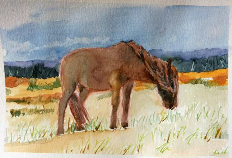 DD 21 – oh drat – over fiddled with this feral pony and spoiled a painting. You win some