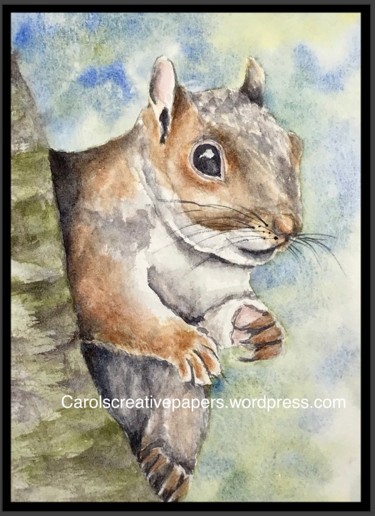 Squirrel for World Watercolor Group 🙂 1F4A0C70-FAB4-4E58-98FD-E9196A0D70AF