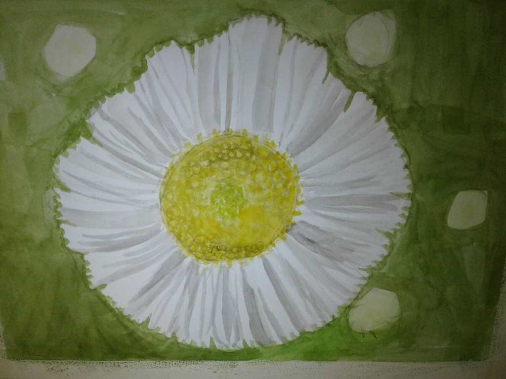 """So here's a daisy """"wildflower"""". 20180207_100145"""