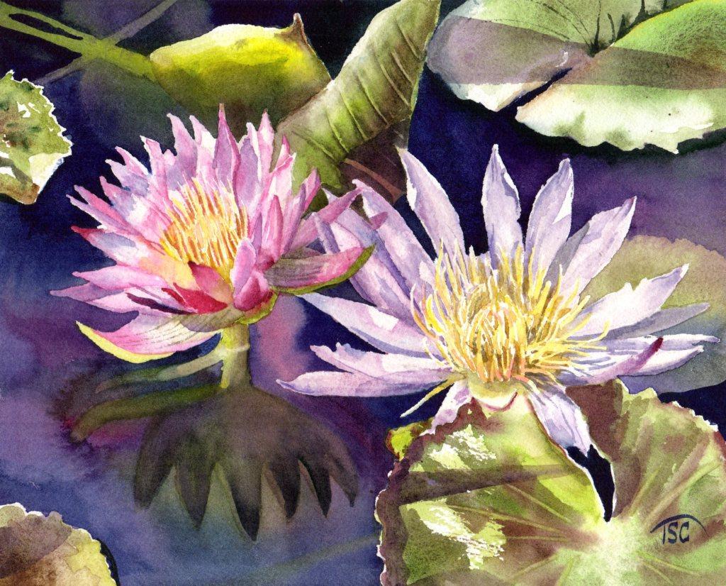 Waterlilies in the Sunshine 5.