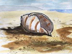 February day 23 Shells #WorldWatercolorGroup B1692FCB-642B-4593-B246-A9EFB36EEF6B