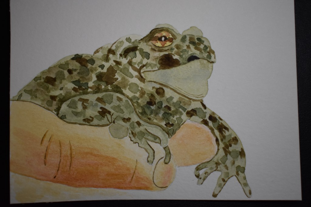 Feb 19, 2018 challenge frog. This is actually a toad, being forced to pose for the camera. DSC_1508