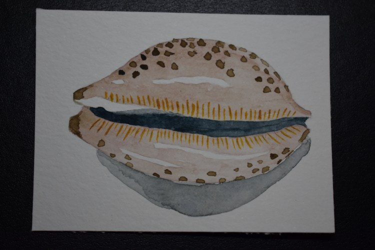 Feb 23, 3018 challenge shell. Cowrie. It was nice to work with an actual object instead of a photo f