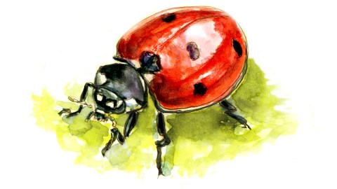 #WorldWatercolorGroup - Day 15 - A Gigantic Ladybug - Doodlewash