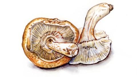 #WorldWatercolorGroup - Day 17 - Mushrooms Fun With Fungus - Doodlewash