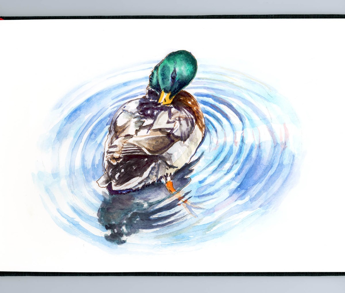 #WorldWatercolorGroup - Day 18 - A Swim In The River - Duck - Doodlewash